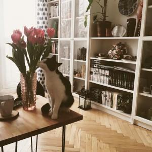 Zbiór kolekcji porcelany Rzecz- Pospolita Sztuka Użytkowa